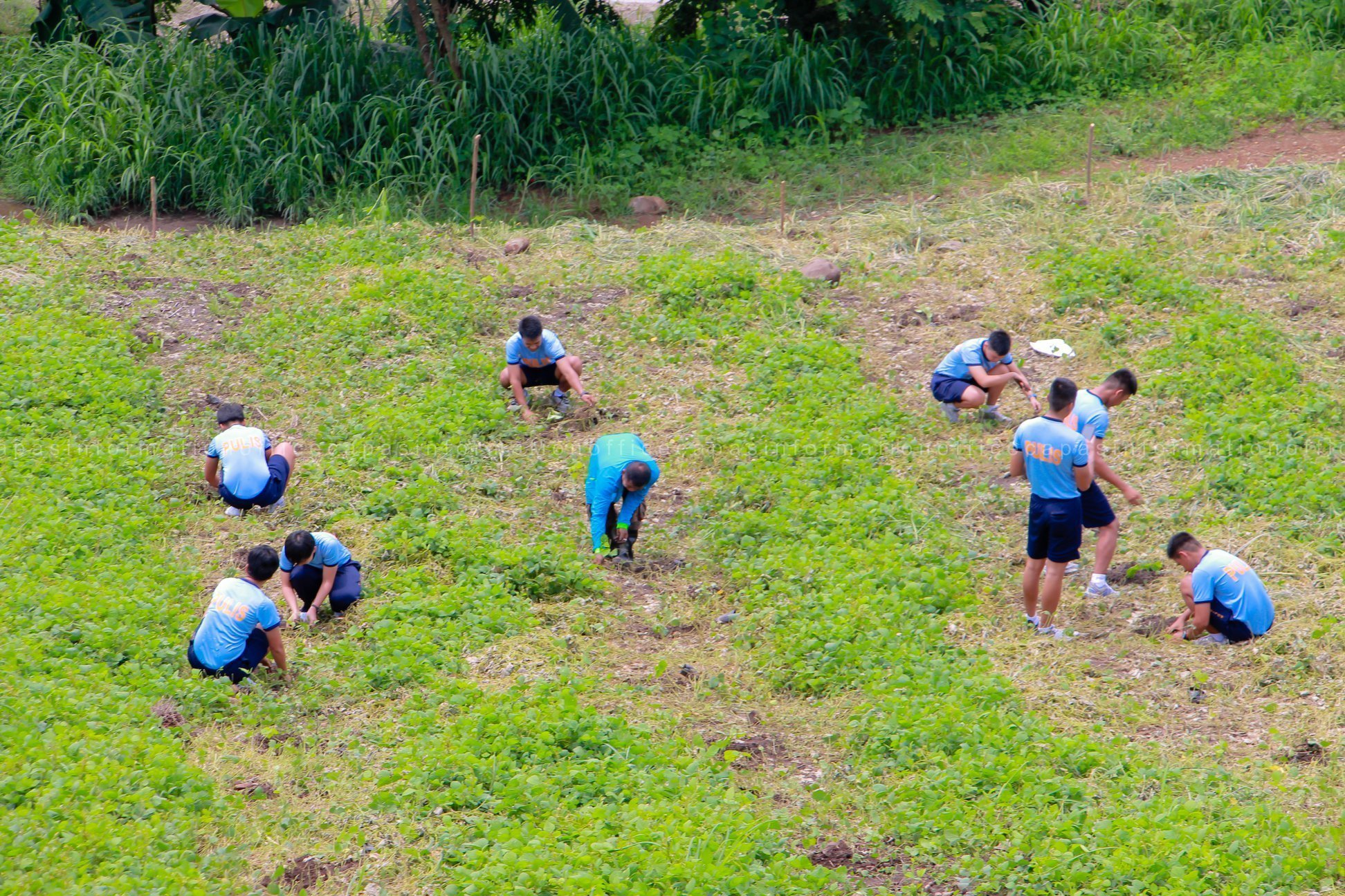 Tree Planting in Sitio Kalangitan.